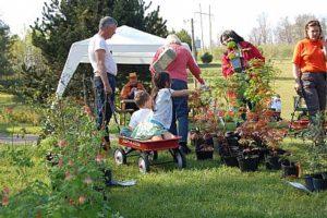 UT Arboretum Plant Sale