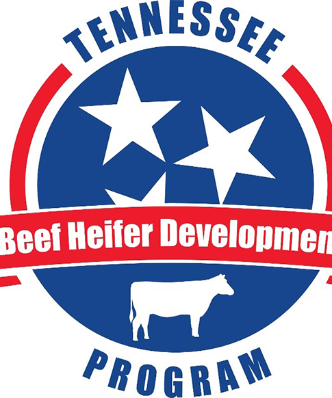 Tennessee Beef Heifer Developlent Program